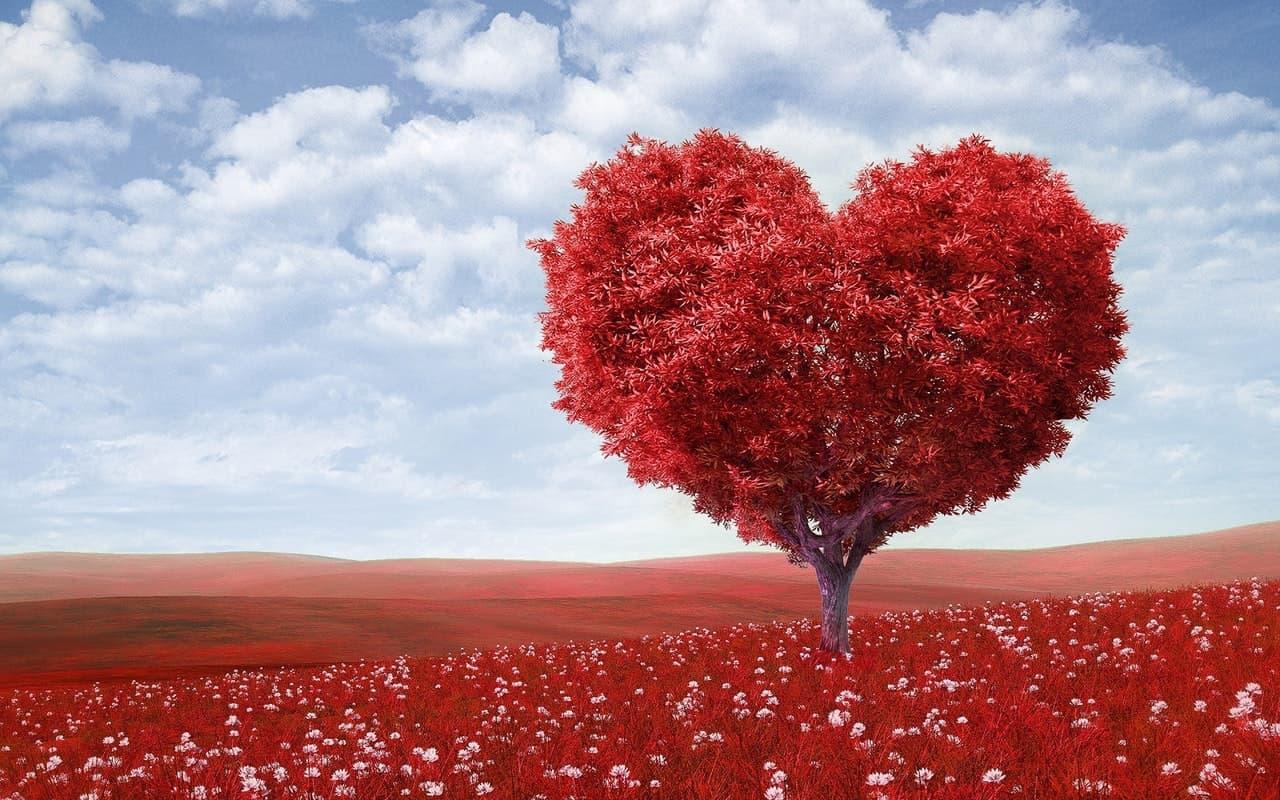 Compasión-Bienestar-VitalCoachingB arcelona